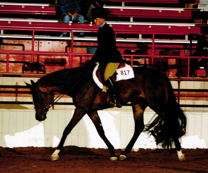 Quarter Horse News Magazine Quarter Horse News Magazine